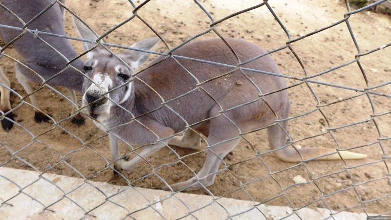 Посетители зоопарка убили кенгуру ради развлечения