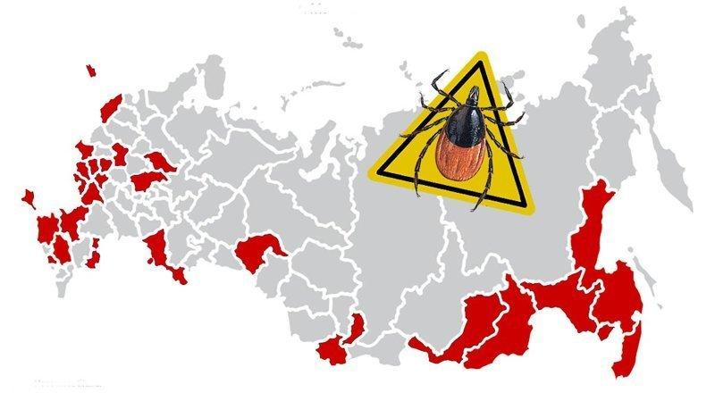 Регионы России, где вас, скорее всего, укусят на праздниках
