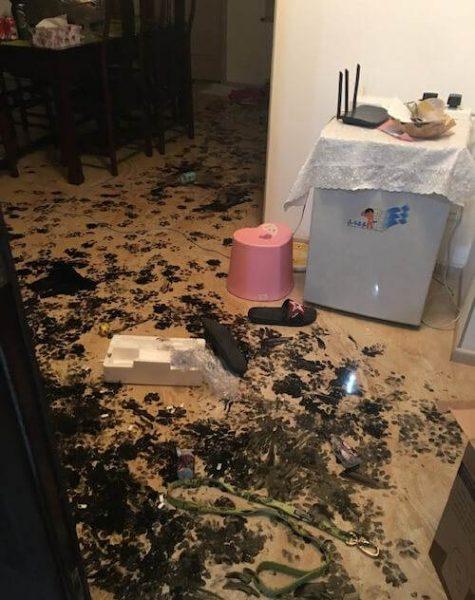 Хозяева оставили пса дома всего на несколько часов. А когда вернулись – чуть не попадали в обморок от увиденного!