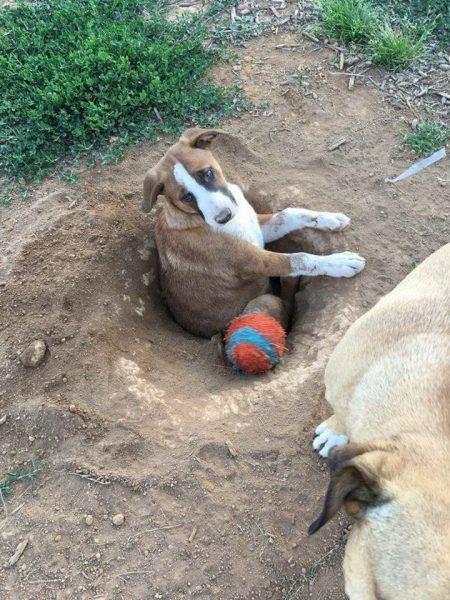 В Сети умиляются самой «глупенькой» собакой в мире. Вы только взгляните, чем прославилась эта кроха!